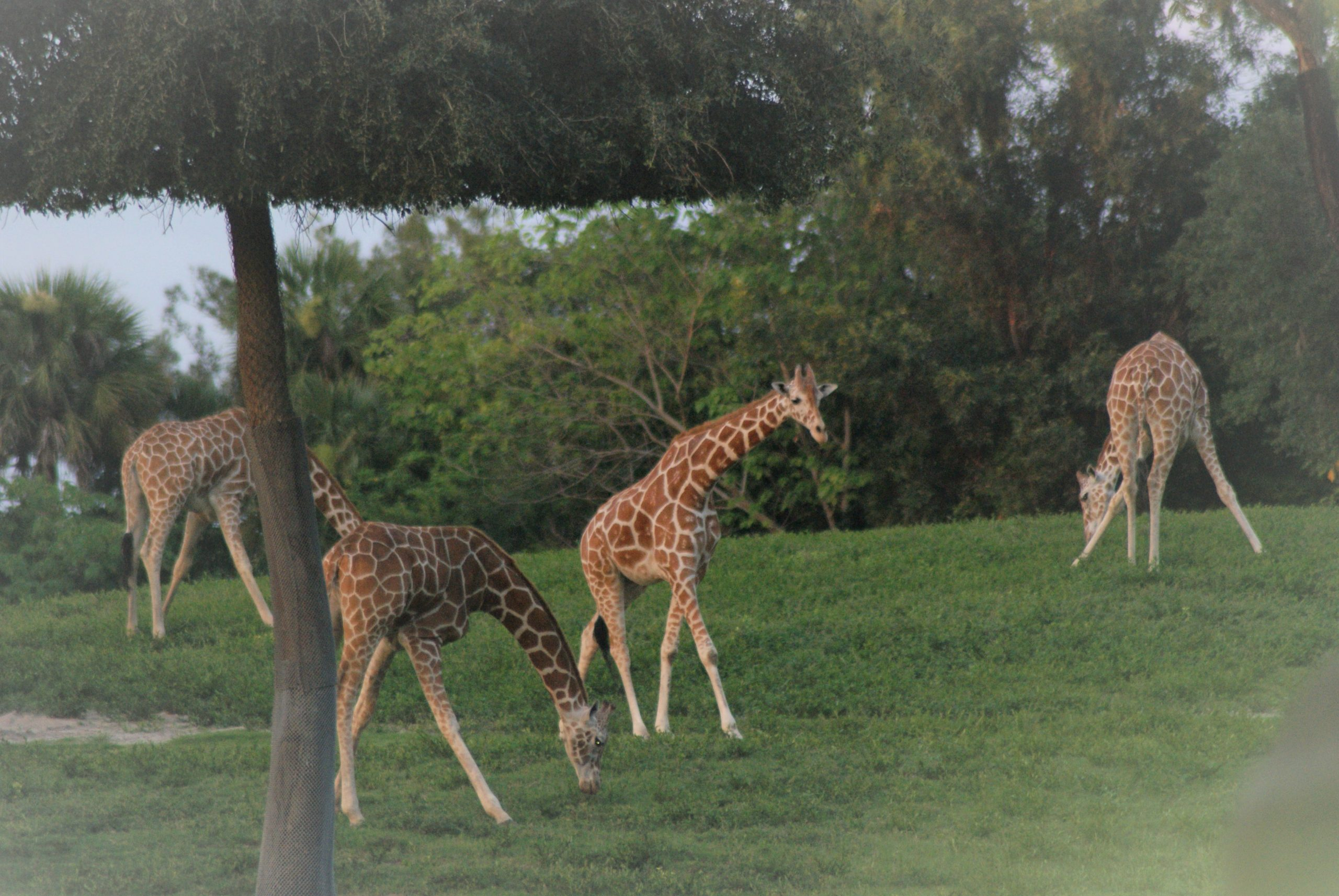 LEARNING FROM GIRAFFES: Be social (Part 2 of 5)
